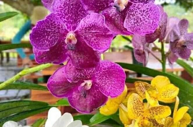 Growing orchids in container