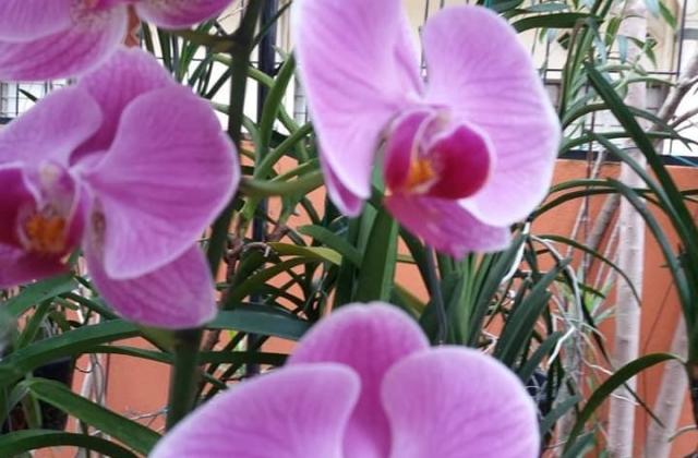 Growing orchids indoor