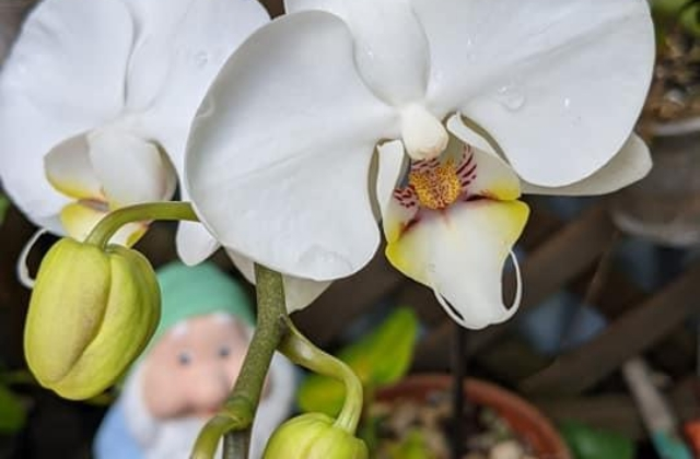 Orchid plants for beginners